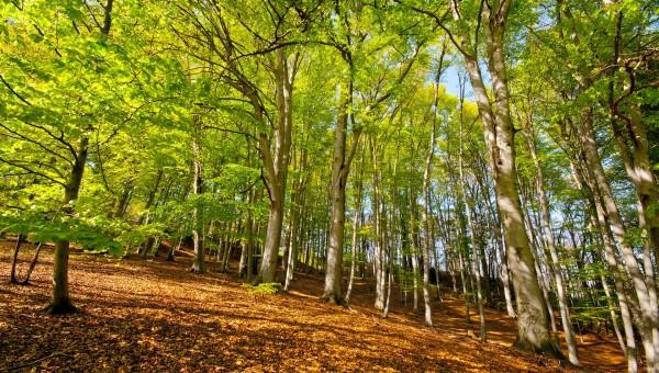 I sentieri e il bosco