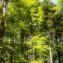 Bauernhof Jogging-Wald