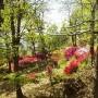 Blumen auf Monte
