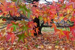 herfst, het seizoen van fijnproevers…